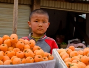 oranges698x400